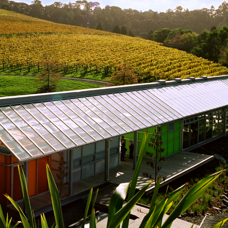 Brick Bay vineyard matakana