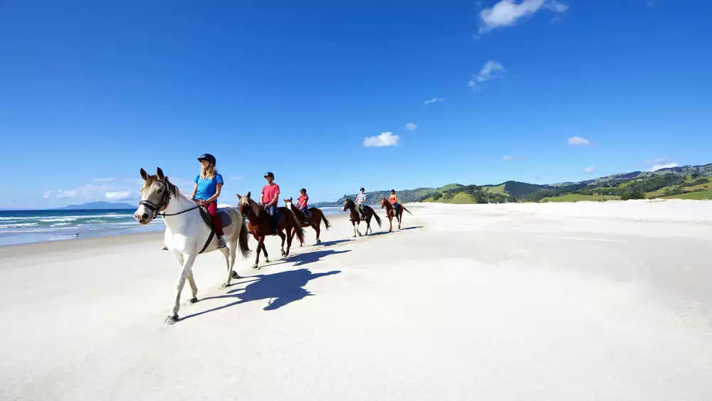 Pakiri Beach horse rides blue sky